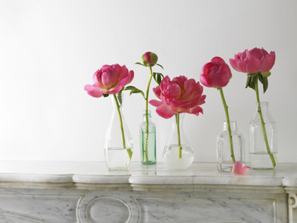 recycled bottles peonies homeshoppingspy2