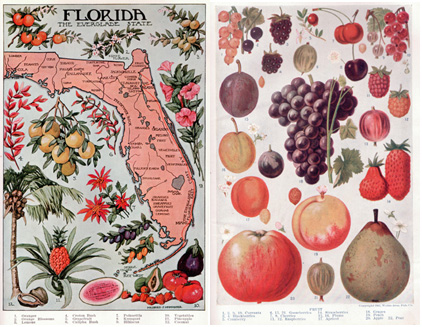 vintage fruits and blooms 7